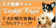 子犬情報サイト[ヤンキーエンジェル]