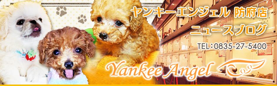ヤンキーエンジェル防府店 ニュースブログ